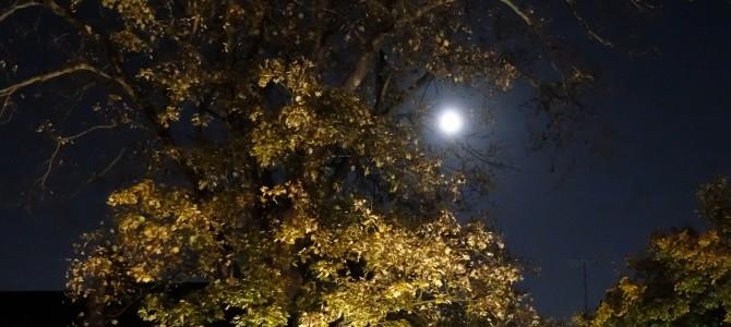 C'est la nuit, la grande, la belle