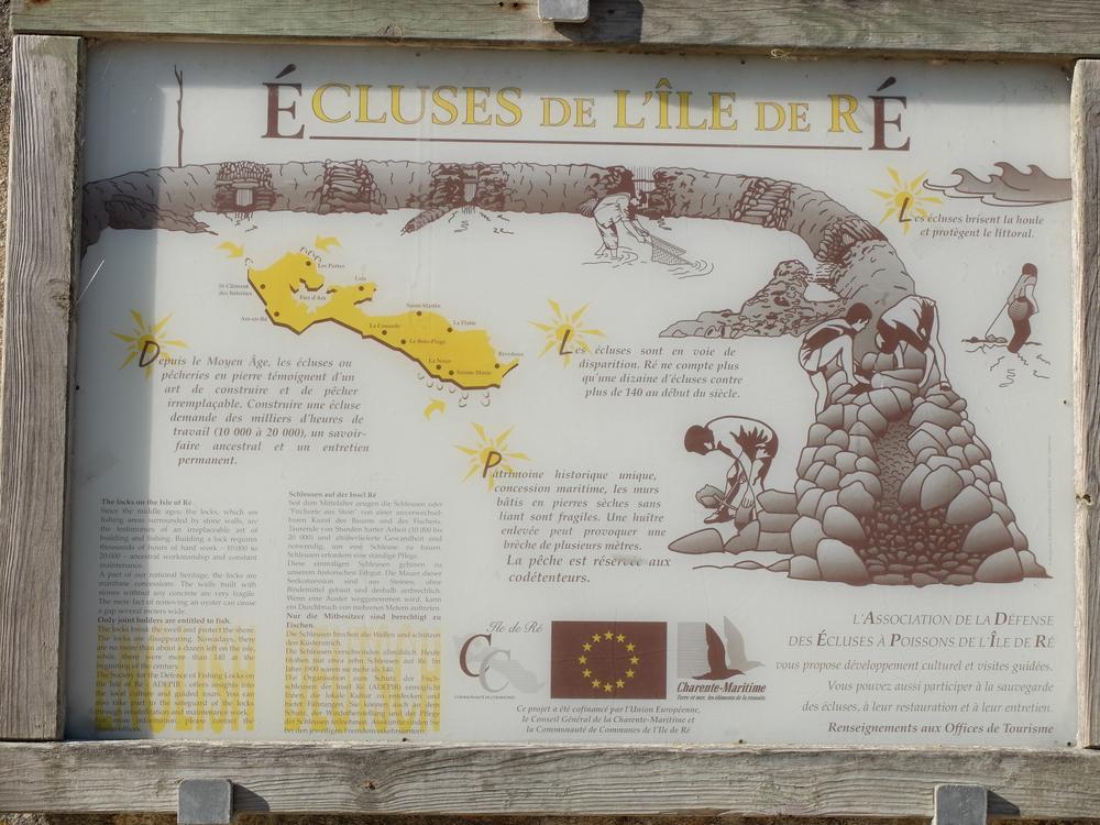 ile-de-re-arboles-maree-basse11