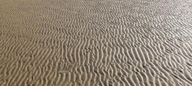La vase de Ré, le sable d'Oléron