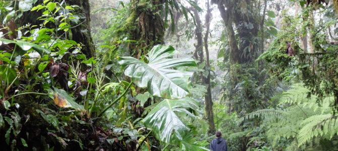 Costa Rica (2/3). 50 matices de verde-50 nuances de vert